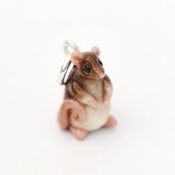 Biscuit - rescue rat