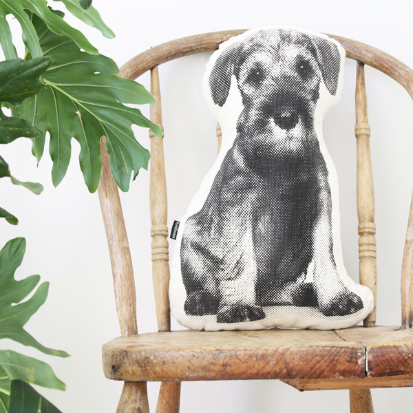 Rex the Terrier