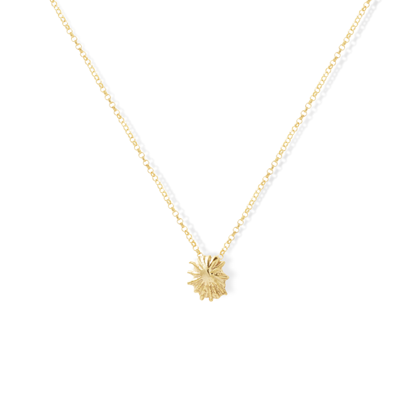 Star Limpet Shell Necklace