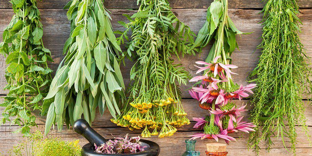 Herbs cold flu main 1000 1486066357